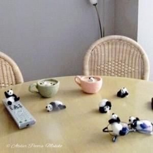 癒しパンダon the table